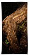 Rain Forest Light Beach Towel