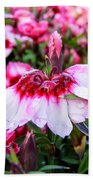 Rain Soaked Dianthus Beach Towel