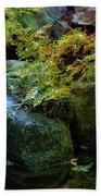 Rainbow Autumn Ferns At Pickle Creek 6303 H_3 Beach Towel
