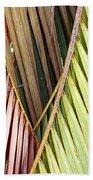 Rainbow Of Palms Gp Beach Towel