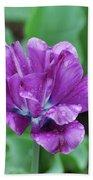 Raindrops Clinging To The Purple Petals Of A Tulip Beach Towel