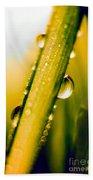 Raindrops On A Blade Of Grass Beach Sheet