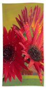 Raindrops On Gerbera Beach Towel