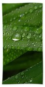 Raindrops On Green Leaves Beach Towel by Carol Groenen