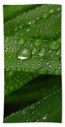 Raindrops On Green Leaves Beach Sheet