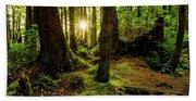 Rainforest Path Beach Sheet