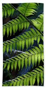 Rainforest Wonder Beach Towel
