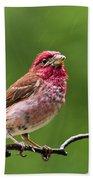 Rainy Day Bird - Purple Finch Beach Towel by Christina Rollo