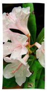 Rare Florida Beauty - Chapmans Rhododendron Beach Towel