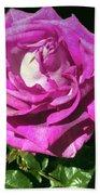 Rays Purple Passion Beach Towel