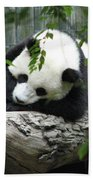 Really Cute Panda Bear Sleeping On A Log Beach Towel