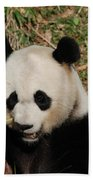 Really Great Panda Bear Chomping On A Fistful Of Bamboo Beach Towel