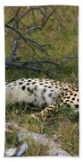 Reclining Cheetah 2 Beach Towel