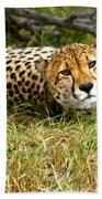 Reclining Cheetah Beach Towel
