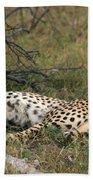 Reclining Cheetah Watching Beach Towel