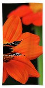 Red Admiral Nectaring On Tithonia Beach Towel