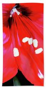Red Amaryllis Beach Towel