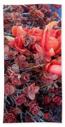 Red And Burgundy Succulent Plants Beach Towel