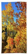 Red And Golden Aspens In Dillon Co Beach Towel