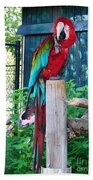 Red  And  Green Macaw         Zoo      Indiana Beach Towel