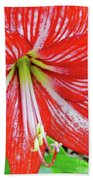 Red And White Beauty Beach Towel
