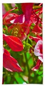Red And White Columbine At Pilgrim Place In Claremont-california Beach Towel