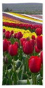 Red And Yellow Tulip Fields Beach Towel