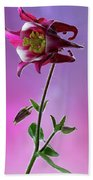 Red Aquilegia 2 Beach Towel