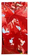 Red Autumn Leaves Art Prints Canvas Fall Leaves Baslee Troutman Beach Towel