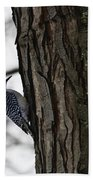 Red Bellied Woodpecker No 1 Beach Towel