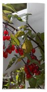 Red Berries On A White Fence Beach Towel