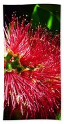 Red Bottle Brush Beach Towel
