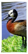 Red Breasted Wood Duck Beach Towel