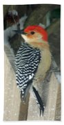 Red Breasted Woodpecker On Fence Beach Towel