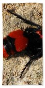 Red Burrowing Insect Beach Towel
