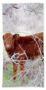 Red Calf In Winter Brush Beach Towel