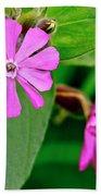 Red Campion - Fairy Flower. Beach Towel
