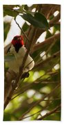 Red-capped Cardinal Digital Oil Beach Towel