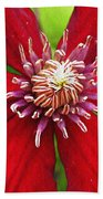 Red Clematis Beach Towel