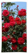 Red Climbing Roses Beach Towel