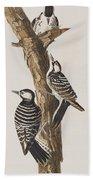 Red-cockaded Woodpecker Beach Sheet