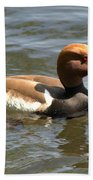 Red-crested Pochard Beach Towel