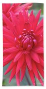 Red Dahlia Delight Beach Towel