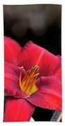 Red Day Lilies Beach Towel