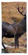 Red Deer Stag In Autumn Beach Towel