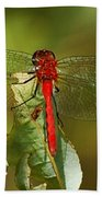 Red Dragon Fly Beach Towel