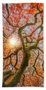 Red Dragon Japanese Maple In Autumn Colors Beach Towel