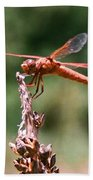 Red Dragonfly II Beach Towel