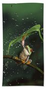 Red-eyed Tree Frog In The Rain Beach Sheet