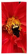 Red Flower And Bee Beach Towel